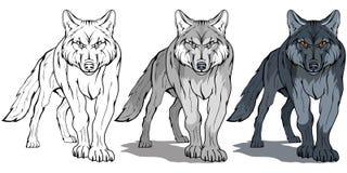 狼,隔绝在白色背景,彩色插图,适当作为商标或队吉祥人,危险森林掠食性动物,狼` s头, 向量例证