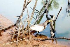 猎人困住的鸟 免版税库存照片