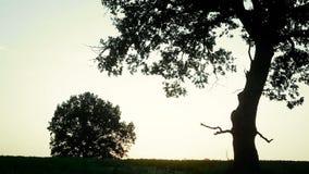猎人是在领域的日落与在他的肩膀的一杆枪 股票录像