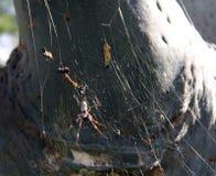 猎人蜘蛛 免版税库存图片
