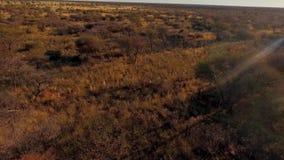 猎人通过大草原做他们的方式徒步旅行队 股票视频