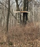 猎人Treestand在森林里 免版税库存照片
