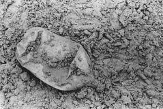 猎物-在沙子的废弃物 免版税库存图片