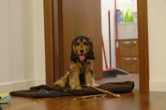 猎犬用残破的棍子 免版税图库摄影