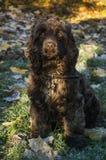 猎犬画象阳光 库存照片
