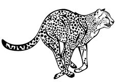 猎豹向量 免版税图库摄影