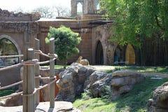 猎豹在动物园里 免版税库存图片