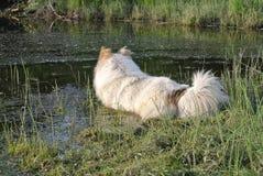猎鸟犬情节比赛狩猎山地 库存照片