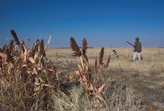 猎鸟犬狩猎人 免版税库存照片