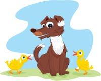 猎鸟犬 免版税库存图片