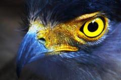 猎鹰。 免版税库存照片