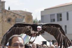猎鹰训练术显示在à 维拉的中世纪市场上 库存图片