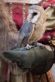 猎鹰训练术显示 库存照片