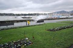 猛冲在湖边,日内瓦,瑞士 免版税库存照片