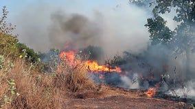 猛冲的和漫延的火在森林里 股票视频