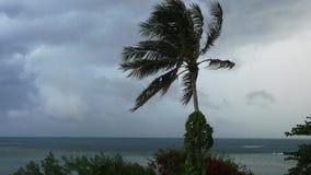 猛烈的极端旋风风摇摆棕榈树 热带充斥的雨季节,重的热带风暴天气 3840x2160 股票录像