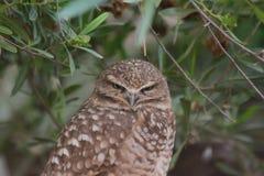 猛禽在菲尼斯动物园里 免版税库存照片