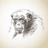 黑猩猩剪影  免版税库存图片