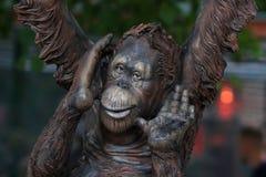 猩猩婴孩的凝视, 免版税库存图片