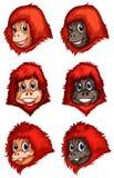 黑猩猩头  库存例证