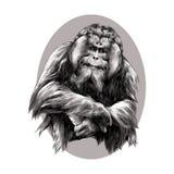猩猩 皇族释放例证