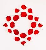 从猩红色玫瑰的瓣的框架以一个菱形的形式在白色背景 库存照片