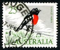 猩红色罗宾澳大利亚邮票 库存照片