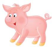 猪吮 免版税图库摄影