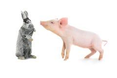 猪和兔子 库存图片