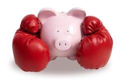 猪和拳击手套 免版税库存图片