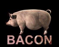 猪和烟肉   免版税图库摄影