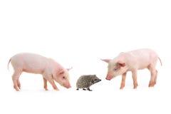 猪和猬 免版税图库摄影