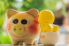 猪和鸭子 免版税库存图片