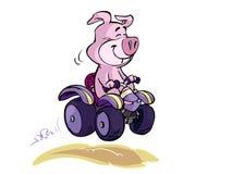 猪四元组 向量例证