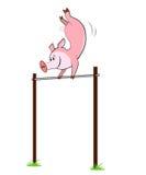 猪在一架单杠垂悬 库存图片