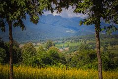 猪屎豆属junceasunn大麻和美丽的天空的黄色领域在Pai,夜丰颂,北泰国 库存照片