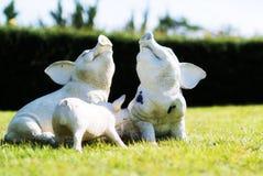 猪微笑的柔光石雕象  免版税库存照片