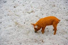 猪用在农场的小猪 库存图片