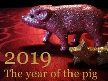 2019猪的年 库存图片