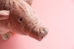 猪的新年在中国日历的 图库摄影