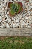猪的耳朵在岩石庭院里 图库摄影