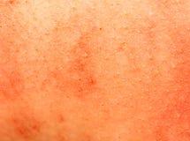 猪皮背景  免版税图库摄影