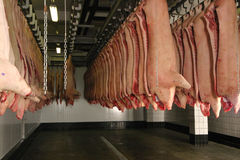 猪肉尸体 库存图片
