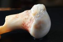 猪腿骨头展示软骨联接 免版税库存照片