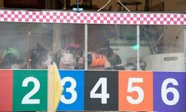 猪赛跑 免版税图库摄影