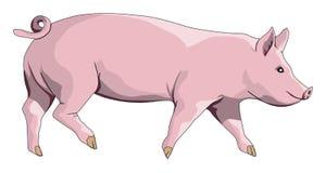 猪 免版税库存照片