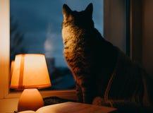 猫、台灯和书 黄昏的舒适家 图库摄影