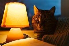猫、台灯和书 黄昏的舒适家 免版税图库摄影