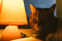 猫、台灯和书 黄昏的舒适家 库存照片