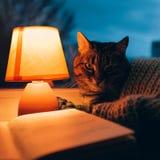 猫、台灯和书 黄昏的舒适家 免版税库存图片